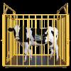 Весы для животных